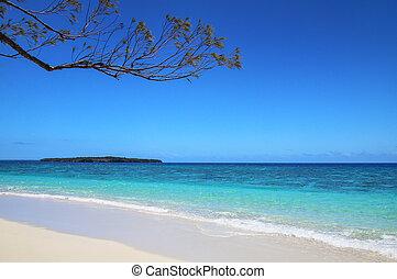 spiaggia sabbiosa, a, davvero, isola, in, ouvea, laguna, lealtà, isole, nuova caledonia