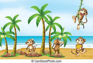 spiaggia, scimmia