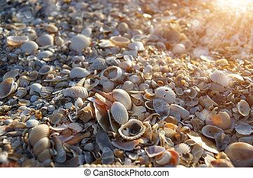 spiaggia, sgusciare