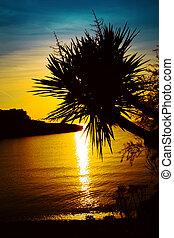 spiaggia., silhouette, albero, tropicale, palma, tramonto