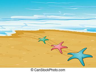 spiaggia, starfishes, tre, colorito