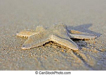 spiaggia, stella, mare