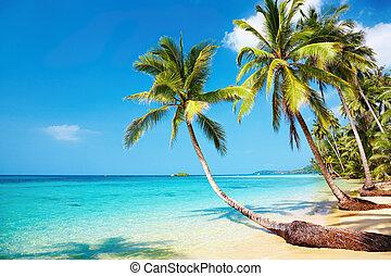 spiaggia, tropicale