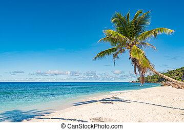 spiaggia., tropicale, fondo., perfetto, vacanza, isola