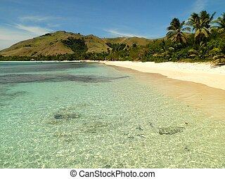 spiaggia tropicale, in, figi