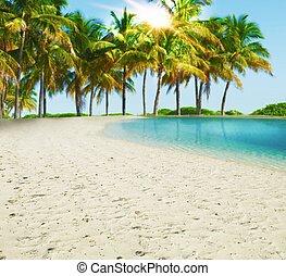spiaggia tropicale, paradiso