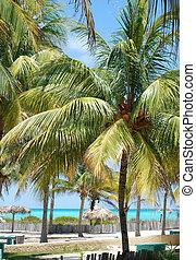 spiaggia tropicale, scena