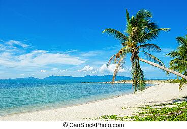 spiaggia tropicale, -, vacanza, fondo