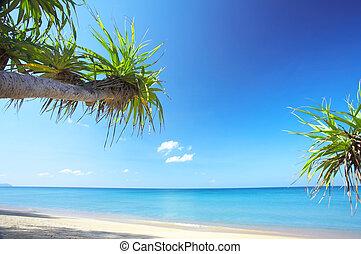 spiaggia, tropico
