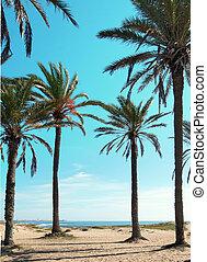 spiaggia, verticale, albero, palma, alto, vista