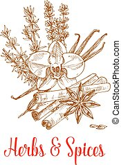 Spice herbs and herbal spices vector sketch