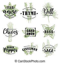 Spice or herb lettering with food condiment sketch