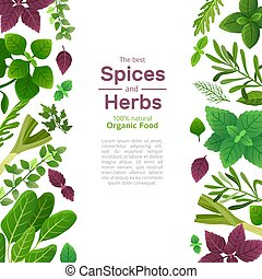 Spices and herbs. Basil mint spinach coriander parsley dill and thyme. Indian spice cooking asian food ingredients vector background