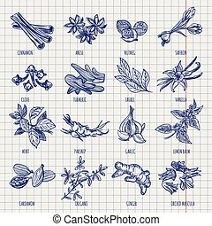 Spices and herbs sketch collection