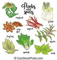 Spices and herbs vector set. Colored on white