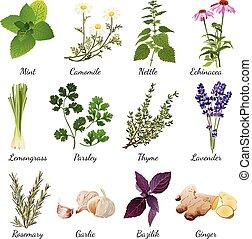 Набор с органическими травами объекты и полевые цветы элементы изолированные векторная иллюстрация