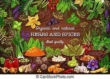 Cooking spices seasonings and culinary herbs flavorings. Vector organic natural onion, tomato or bay leaf, turmeric curry or parsley and dill, spinach and celery or garlic with pepper and horseradish