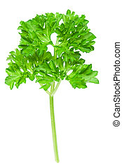 Spices: Fresh parsley leaves over white background