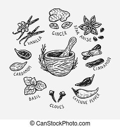 Spices & Herbs, Set. - Set of hand drawn vector spices and...