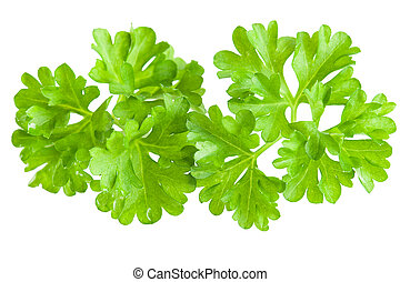 Spices: Macro of fresh parsley leaves over white background