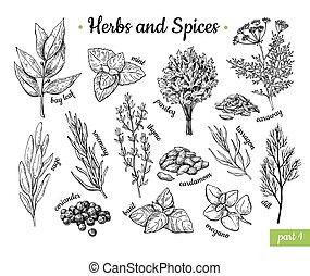 spices., vector, alimento, condimento, drawing., estilo, ...