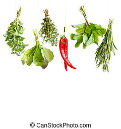 Spicy herbs. - Bundles of spicy herbs and chili on a white ...