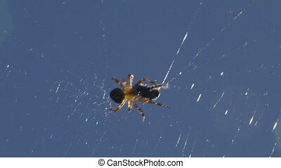 spider 02 - A Spider injecting venom into an insect caught...