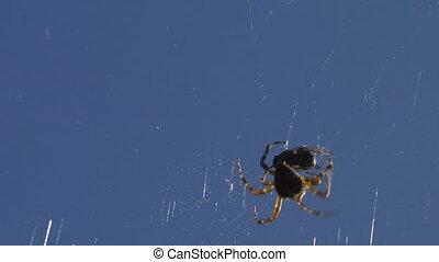 spider 05