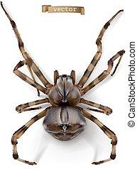 Spider. 3d realistic vector icon