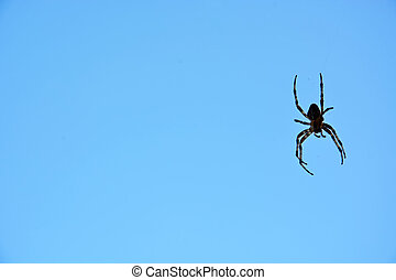 Spider against blue sky