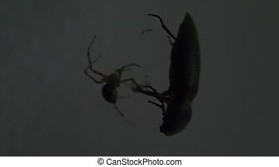 Spider and bug - A spider and a bug