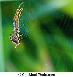 Spider and his net on green background