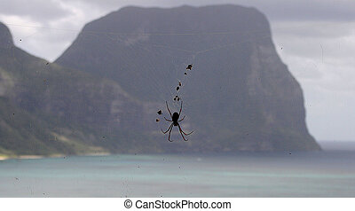Spider and Mountain
