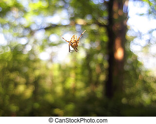 Spider and the net in the forest