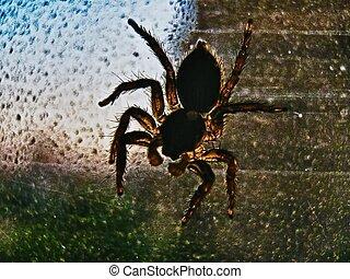 spider, big