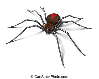 Spider : Black Widow. Isolated on white surface. 3D render.