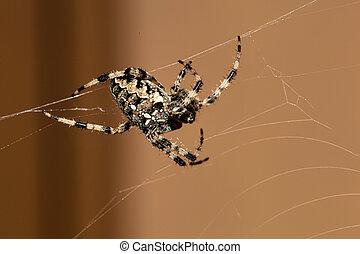 spider builds a web, symbol photo for hunting behavior,...