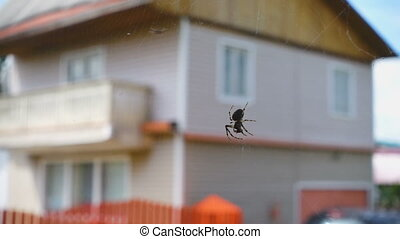 Spider caught in a web of small fly