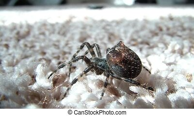 Spider Closeup Before Walking Away - Close-up of mid-sized...