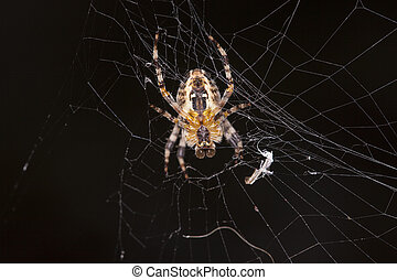 spider does cobweb