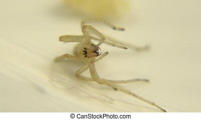 Spider Eating Close Up Mouth