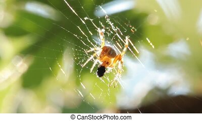 Spider eating in web