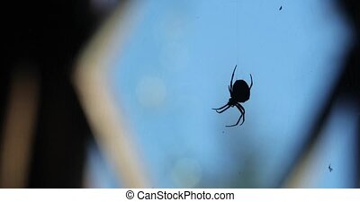 spider hangs on a cobweb against a window in the daytime...