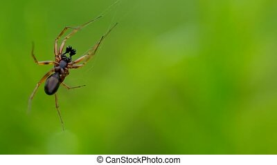 Spider in green grass - Spider on a green background on a...