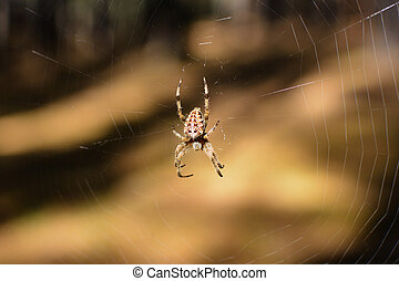 Spider in its environment, the cob web