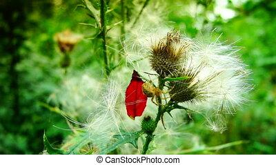 spider in the bush