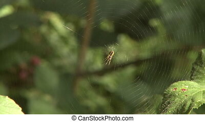 Spider in the center of its web - A brown spider waiting in...