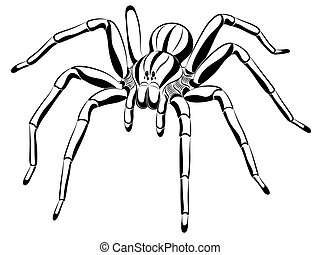 Spider in the form of tattoo