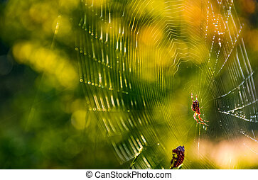 spider in the web on beautiful forest bokeh - lovely...