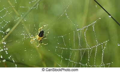 Spider in the web - Yellow spader crawling in the web with...